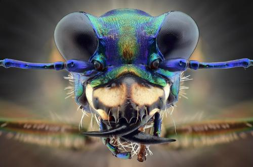 Best Canon Macro lenses for Insects
