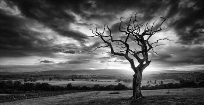 Best Lenses for Black and White Photography – Expert Guide
